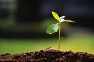 piantina-pianta-germoglio-terreno-seme-terra-by-amenic181-fotolia-1000x665