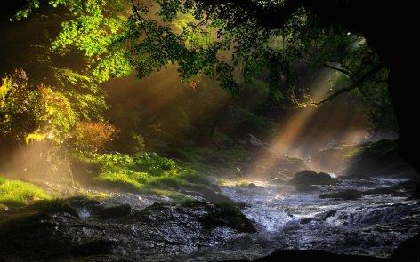 paesaggi_raggi_che_filtrano_nel_bosco
