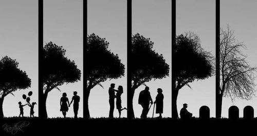 ciclo-della-vita